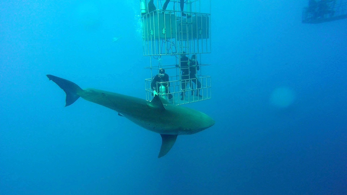 Guadalupe Island - Diving With Great Whites-245-7-jpg