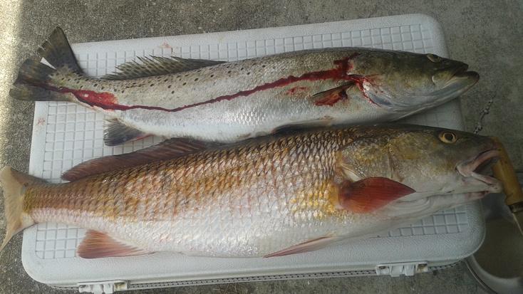 Late start at Mae Lane 4/22-25-inch-trout-26-inch-redfish-jpg
