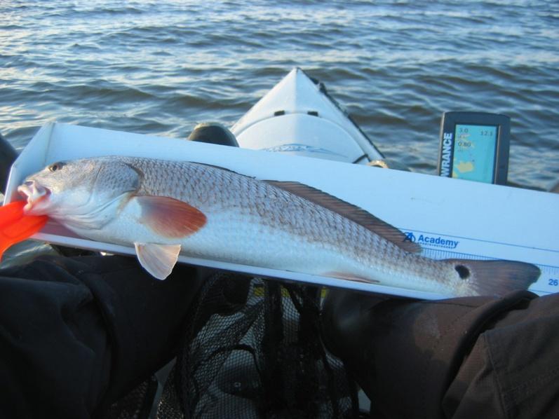 Simpson River - 8 Feb-25inch-redfish-jpg
