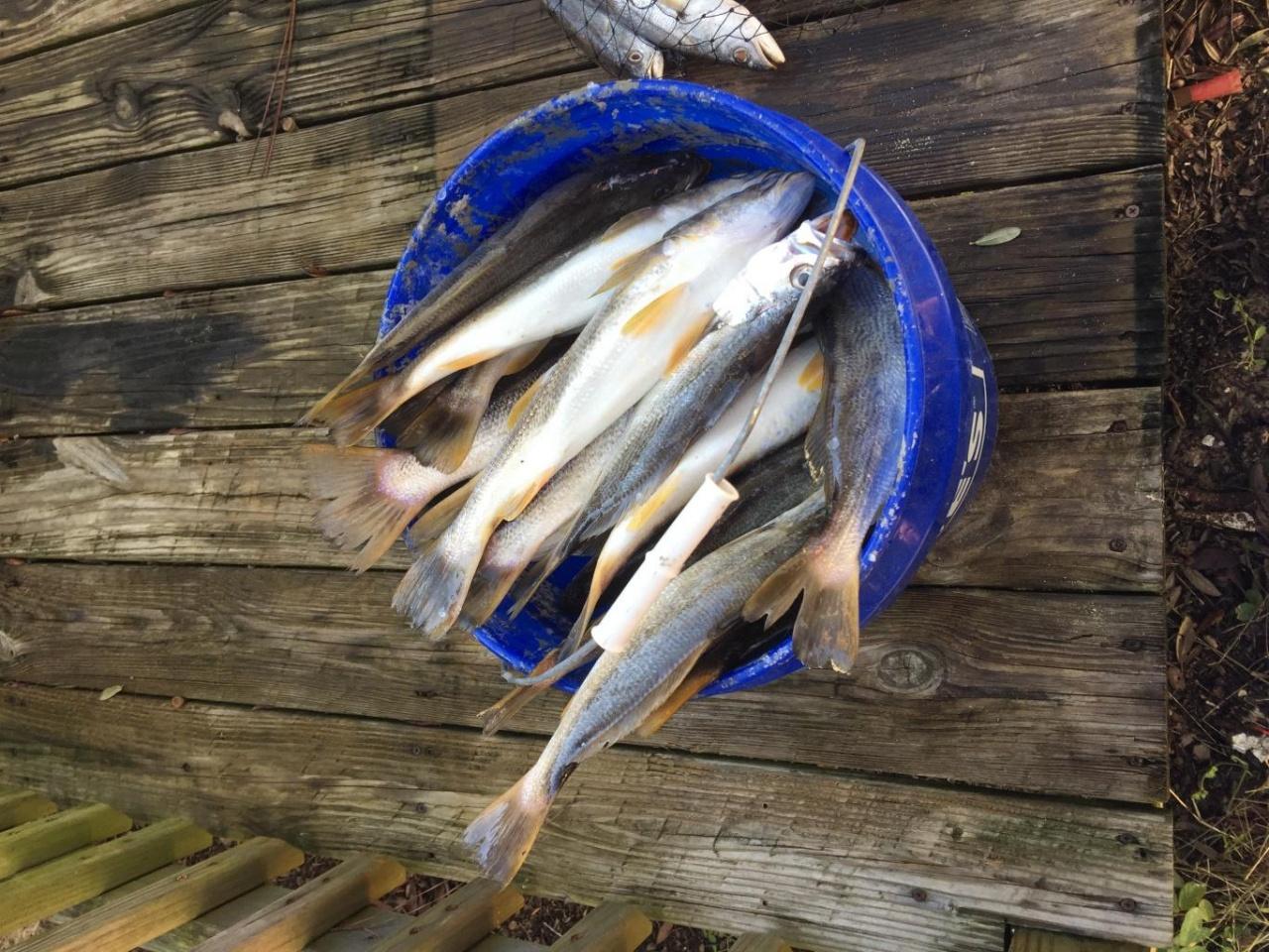 12/3 White trout trip-2a817a35-a34f-4c6f-b7d1-6b9a672c09f0_1543940569126-jpg