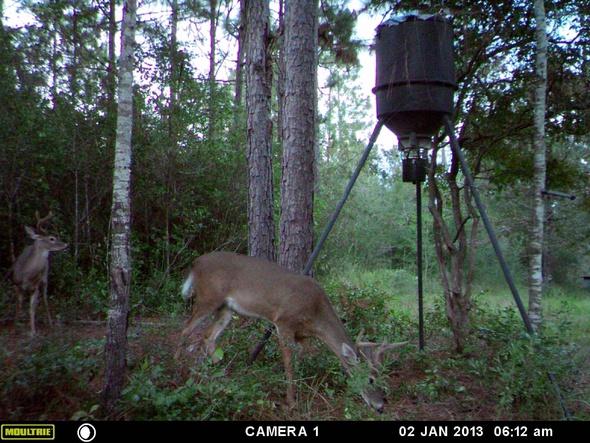 Deer Test-2b-jpg
