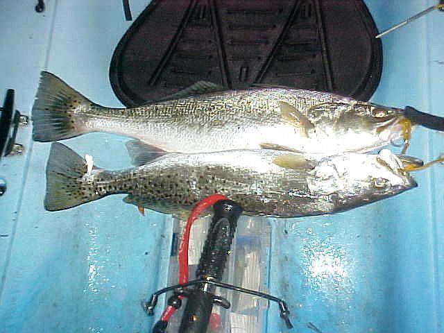Went fishing again earlier tonight.-2trout4-9-09-jpg