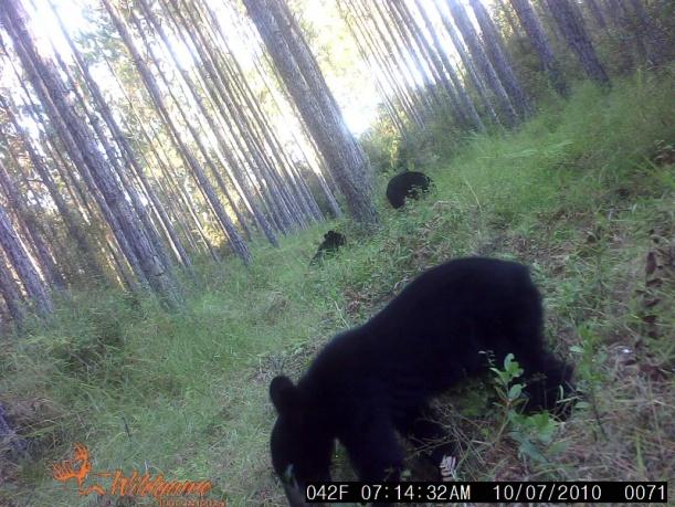 open season on bears?-3-bear-jpg