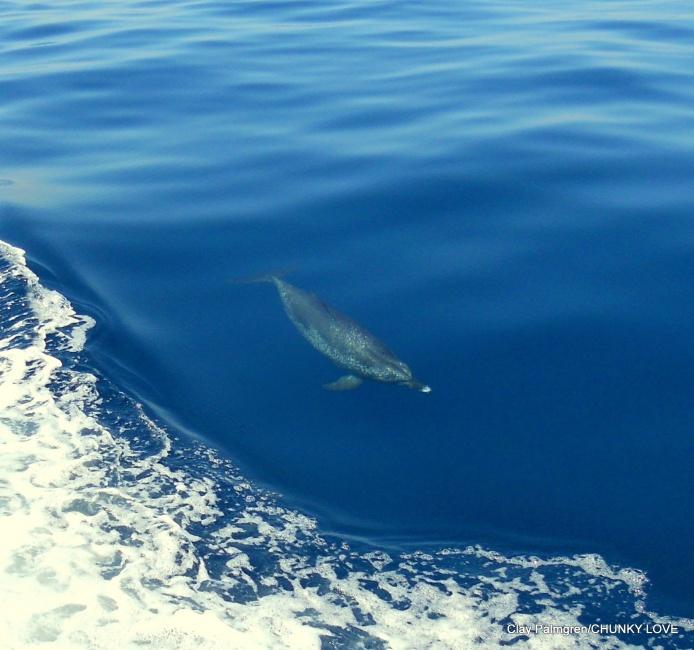 "Spearfishing on the ""O"" 3/26/12-3-jpg"