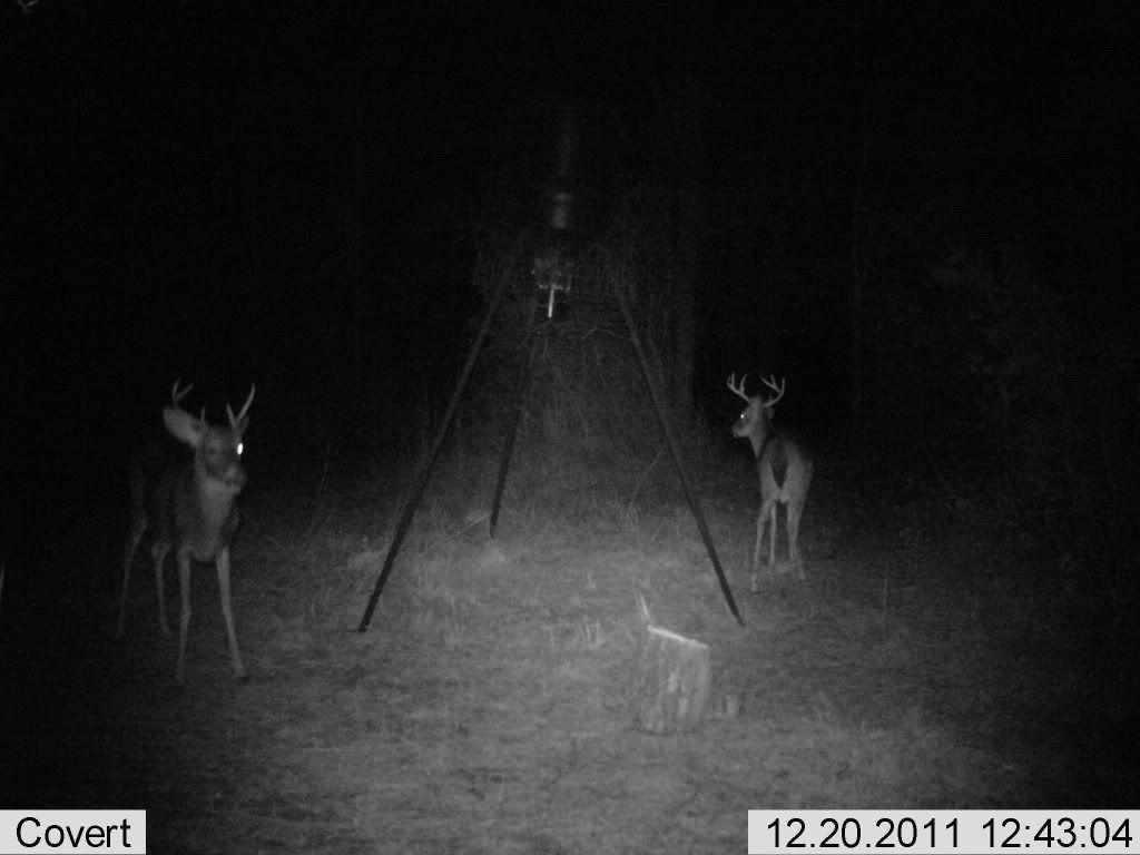 Deer Test-3-jpg