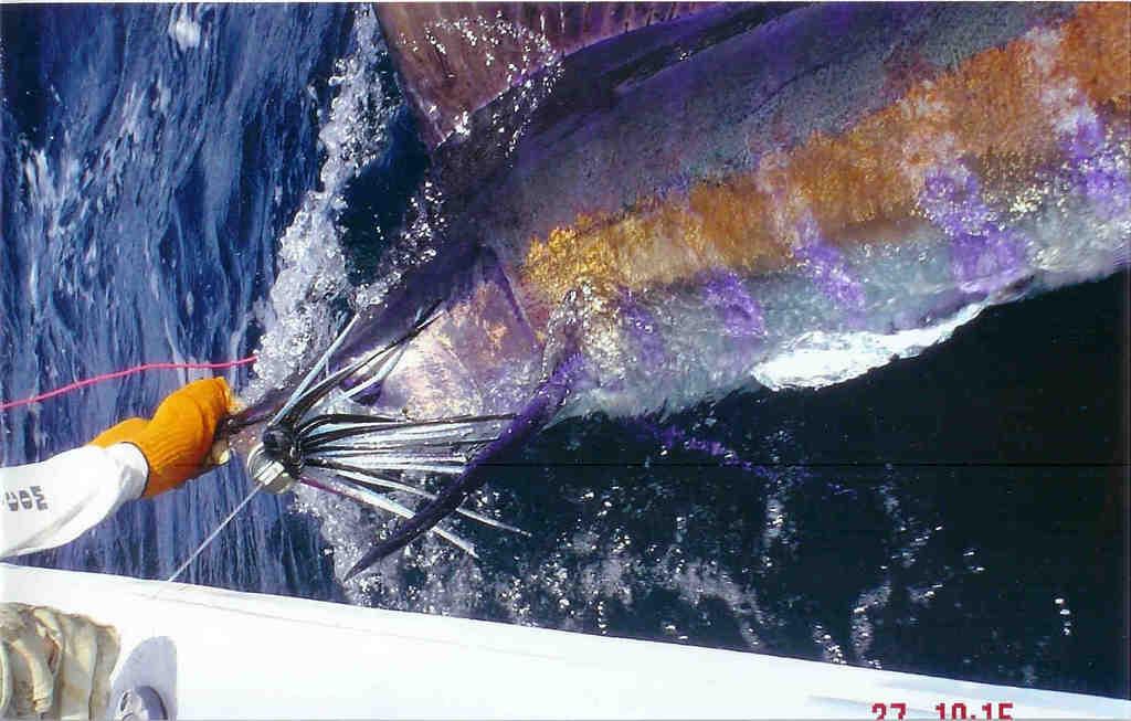 The Best Marlin pics-300lbs-jpg