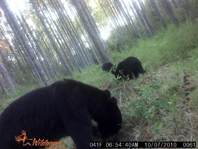 open season on bears?-3bear-jpg
