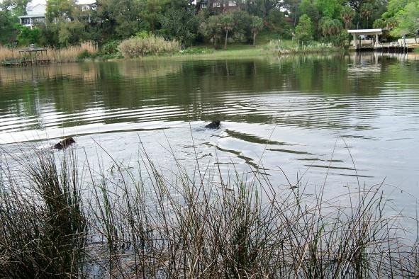 Wading grass flats-41670188-jpg