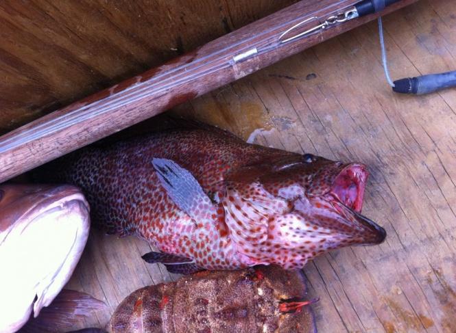 ID this fish!-533310_10150954438013615_749508614_11723105_252971495_n-jpg