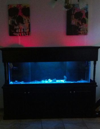 125 Gallon Saltwater Aquarium With Everything You Need