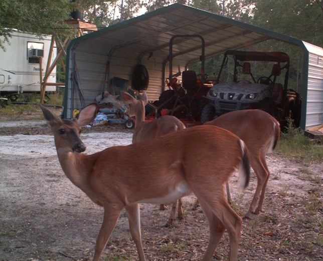 Deer Test-6-jpg