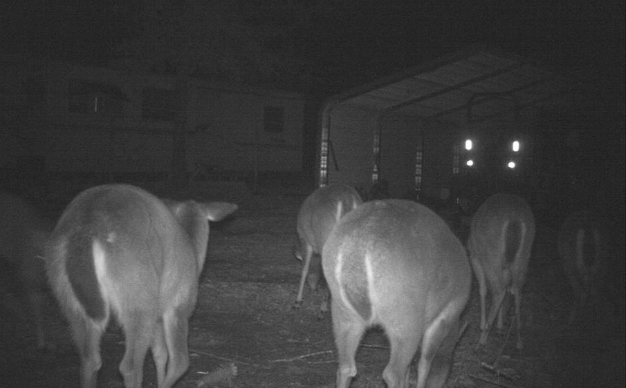Deer Test-7-jpg