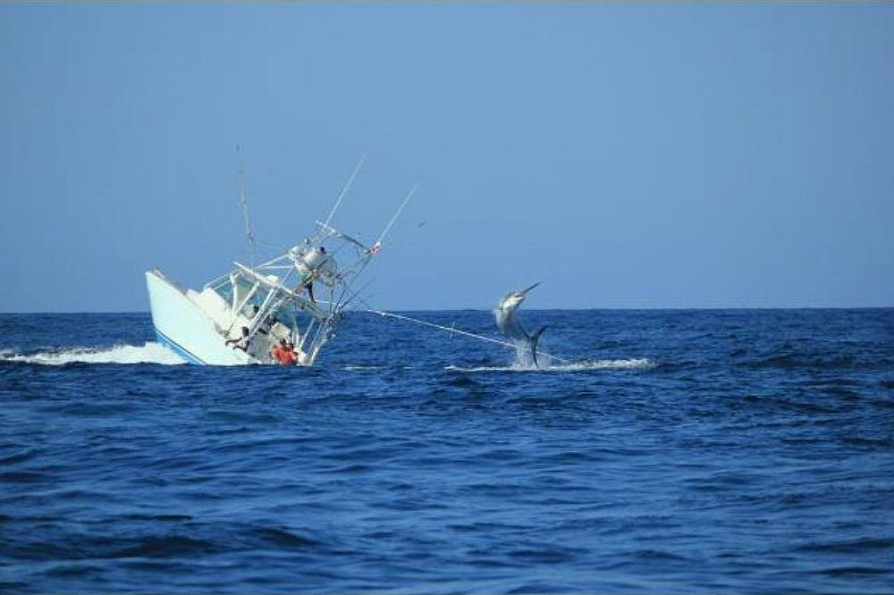 Boat sinks with marlin on the line-778919_10152450718725506_1764796168_o-jpg