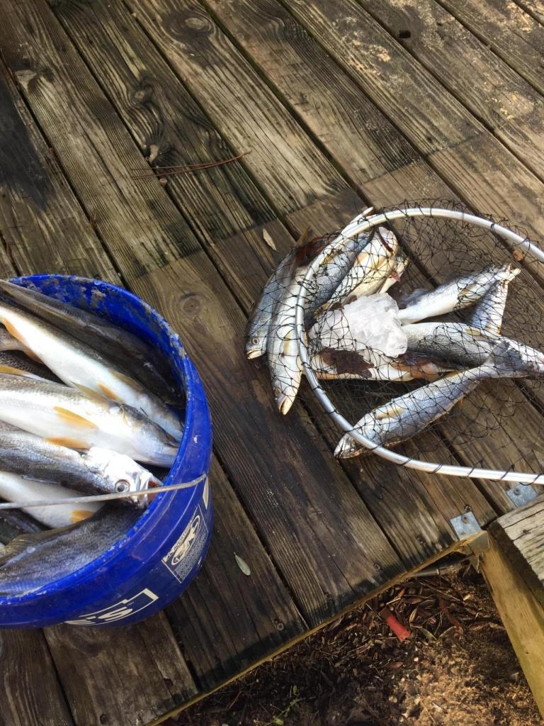 12/3 White trout trip-918d761b-40ec-4a6c-833a-bbeb4aa11f33_1543940593687-jpg