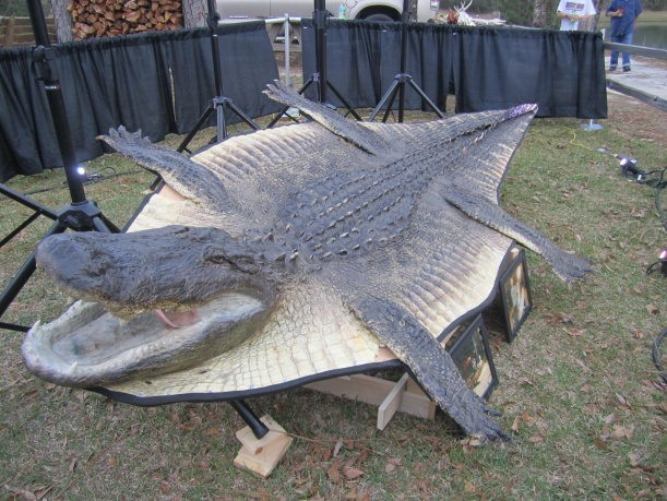 ... All About ALLIGATORS Alligator Rug Jpg ...
