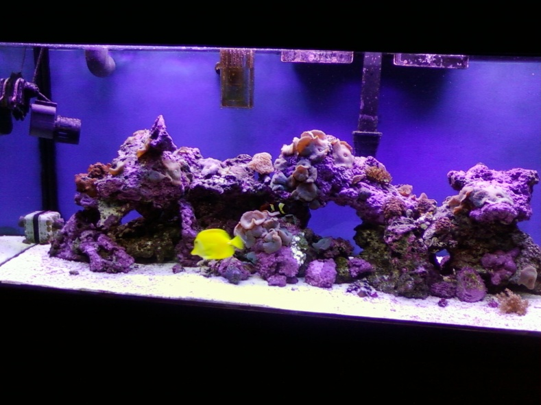 Wtb saltwater aquarium setup 50 gallon pensacola for 50 gallon fish tank