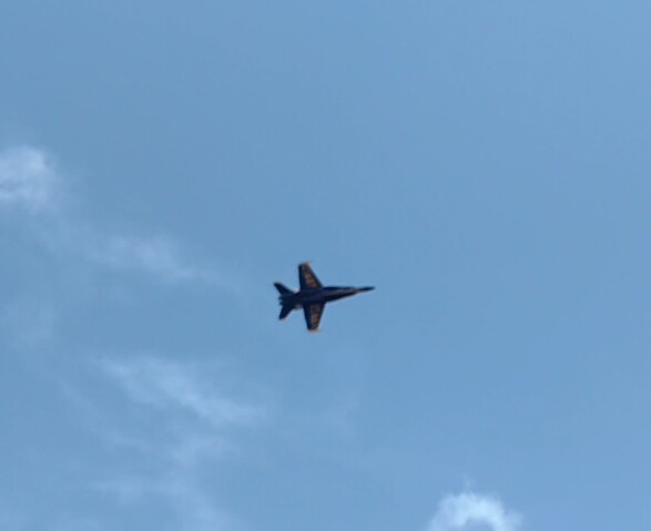 Last week, visitor from South Fla-angel-jpg