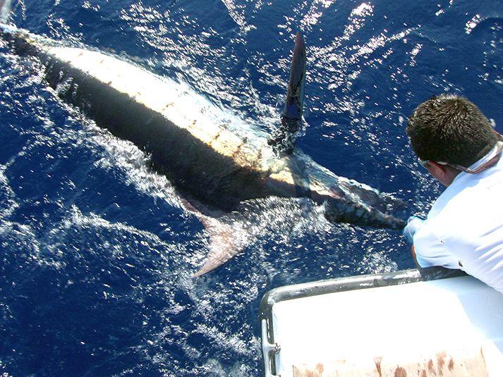 Fishing Costa Rica-azv8-jpg