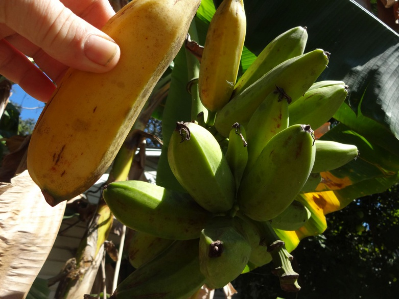 Banana Bread-b-jpg