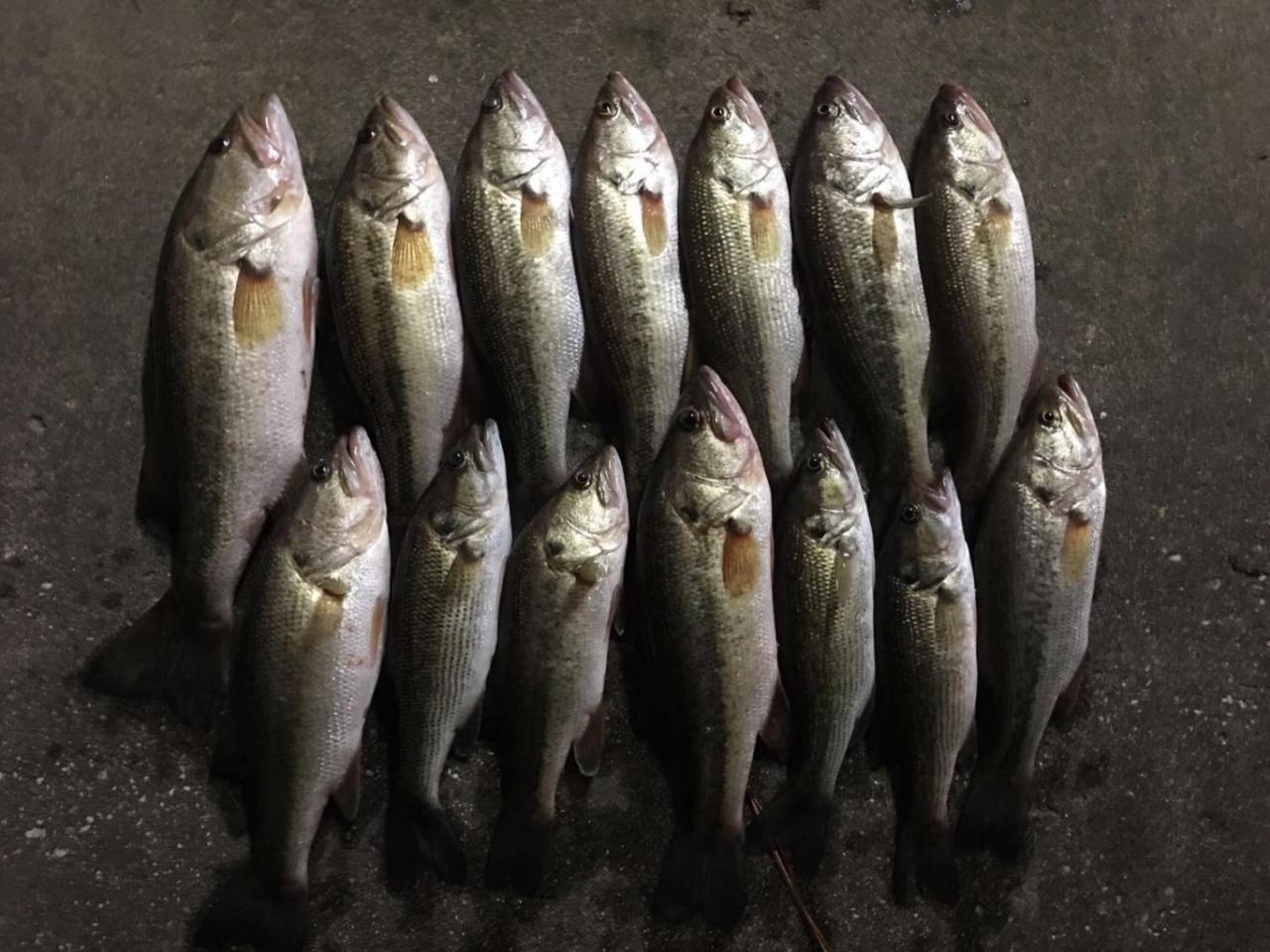 Escambia Conecuh River Bassin Pensacola Fishing Forum