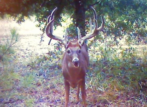 """168"""" Monster taken in Jackson County!!-ba-before2-jpg"""