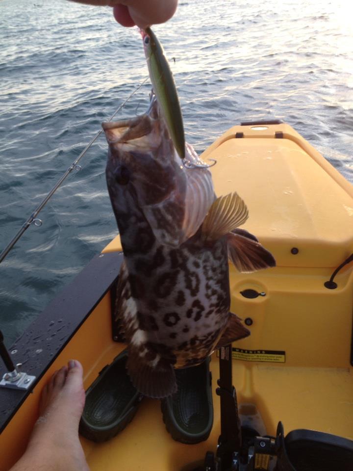 12/9/12 Perdido Bay-baby-grouper-jpg