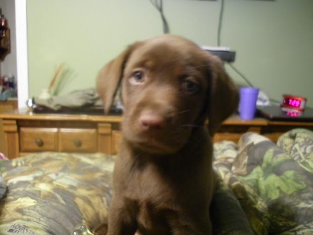 need dog name help-bailey1-jpg