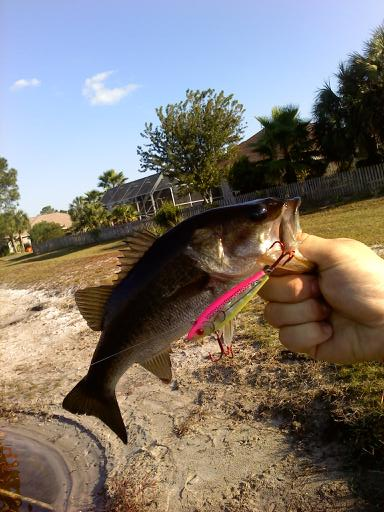 Last Week and a Half Report-bass2-jpg