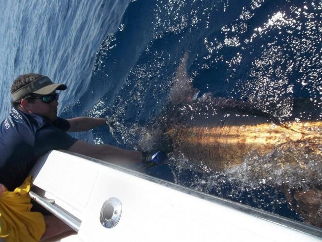 Elbow report-blue-marlin-2-jpg