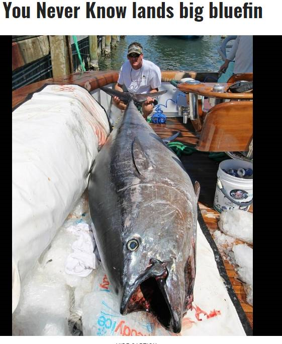 Another giant bluefin landed-bluefin-png