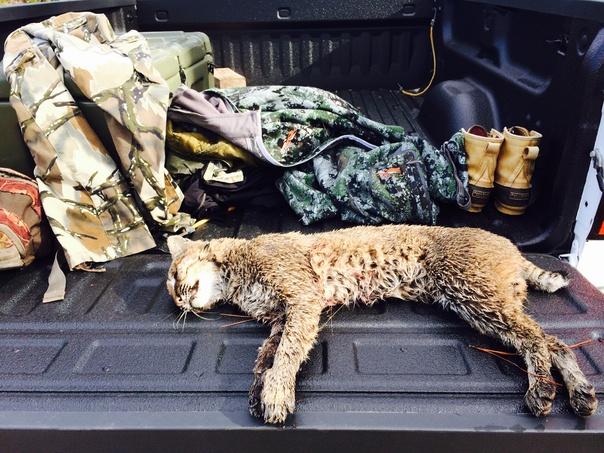 Anyone hunting?  12/26-bobcat-26dec14-jpg