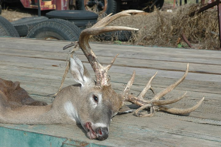 "168"" Monster taken in Jackson County!!-brandonsdeer3-jpg"