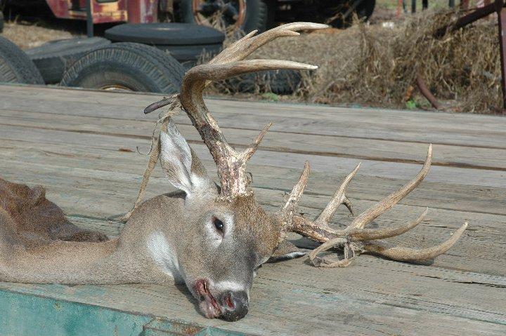 """168"""" Monster taken in Jackson County!!-brandonsdeer3-jpg"""