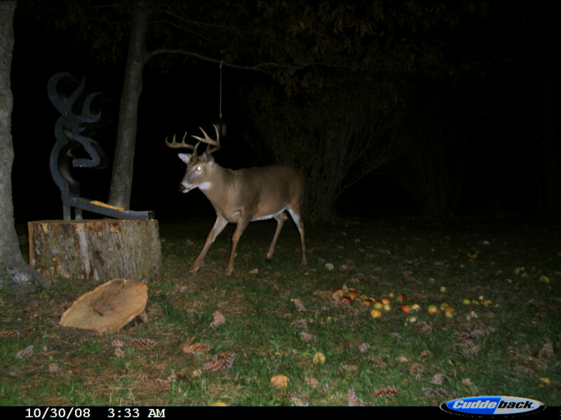 When do the Florida deer shed their velvet?-cdy_0028-jpg
