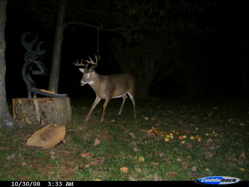 When do the Florida deer shed their velvet?-cdy_0028-jpg