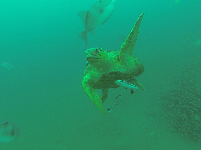 Cool turtle picture I took Saturday-copy-jpg