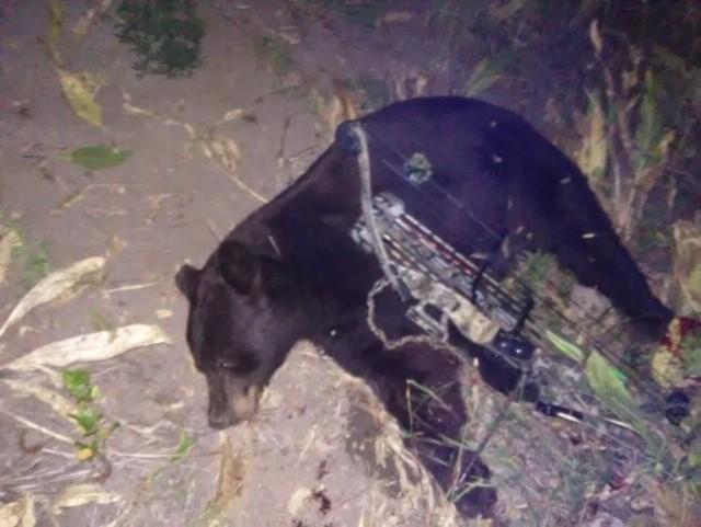 Dad's Colorado bow bear-dads-bear-jpg