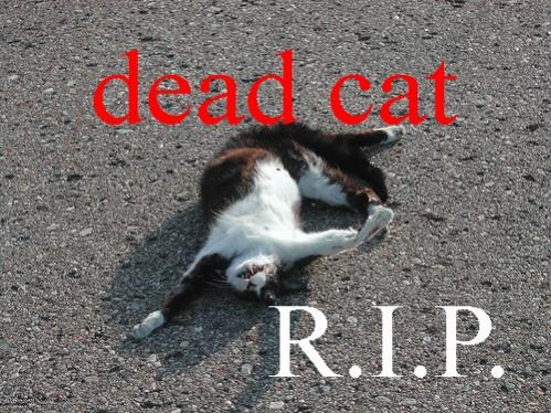 Hot New Craze in New Orleans-dead_cat1-jpg