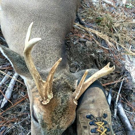 Another big Blackwater buck-deer2-jpg
