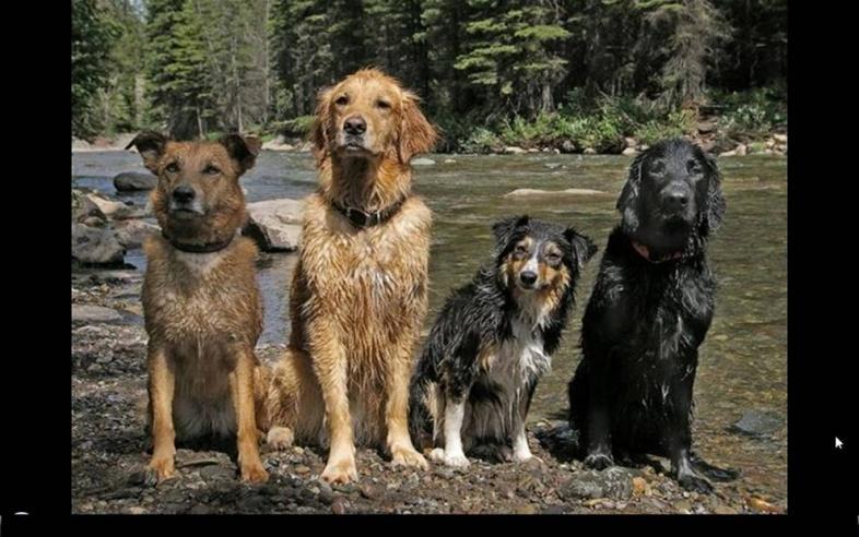 MY Dogs-dogs-jpg