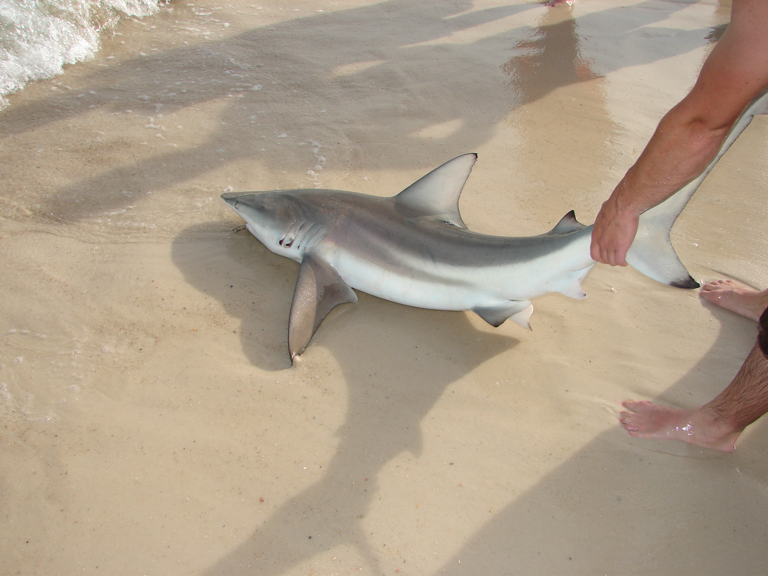 Pensacola area shark fishing!!! with pics!!-dsc05020-jpg