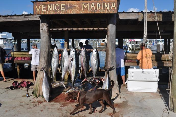 Tuna Catching 101- Venice report-dsc_0003-jpg