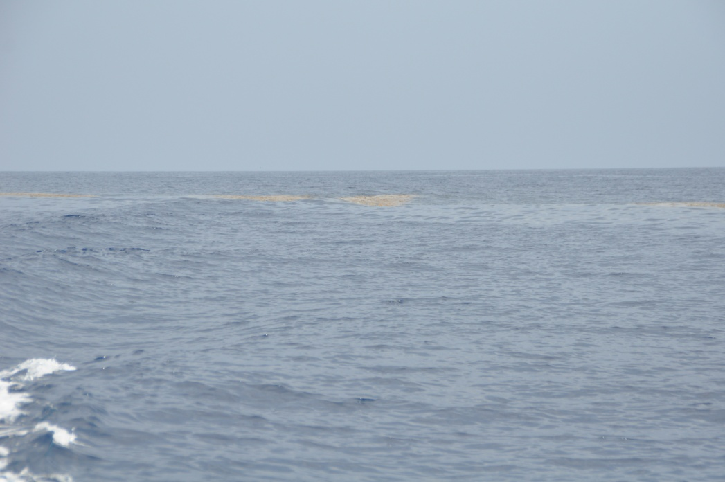 Pelagic pirate offshore trolling report 6-11-dsc_0040-jpg
