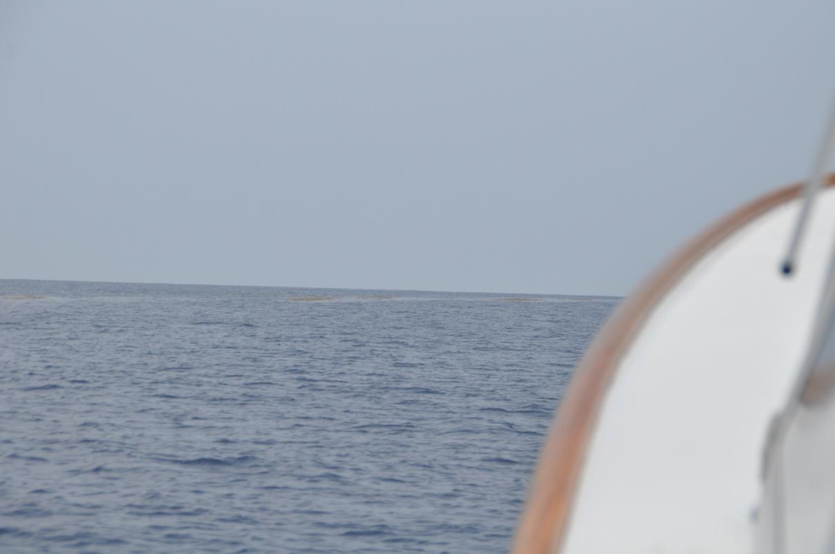 Pelagic pirate offshore trolling report 6-11-dsc_0042-jpg