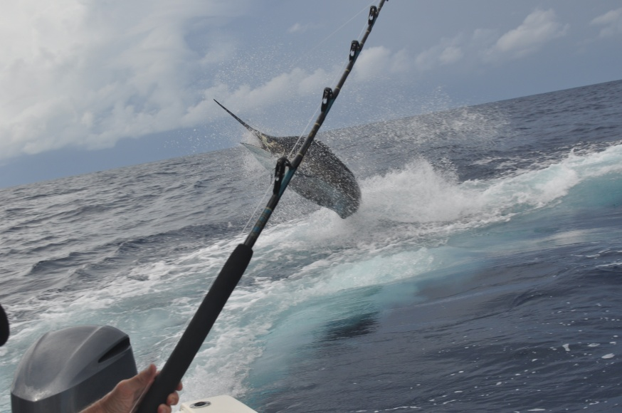 An incredible weekend in Venice (BIG blue marlin, tuna, wahoo)-dsc_0142-jpg