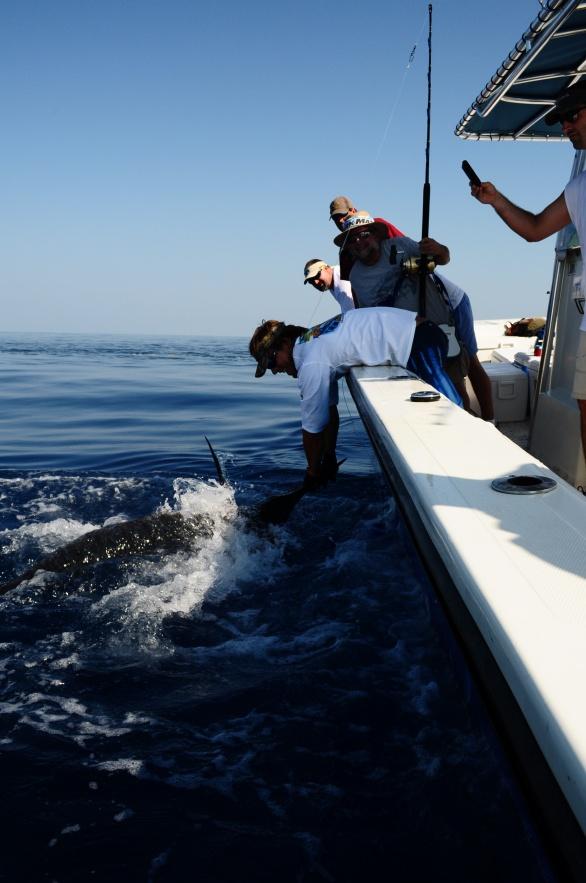June 12 blue marlin-dsc_0192-jpg