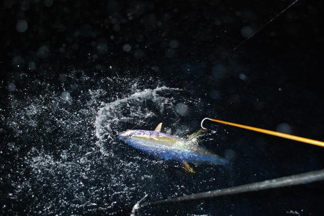 Offshore Venice- Killer tuna trip!-dsc_0408-small-jpg