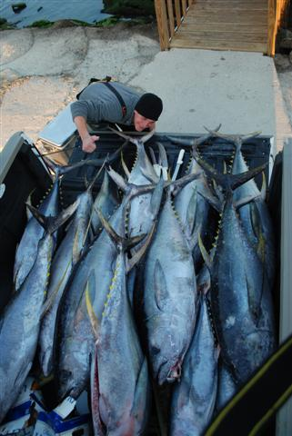 Offshore Venice- Killer tuna trip!-dsc_0426-small-jpg