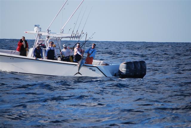 Offshore Venice-Pelagic update.-dsc_0538-small-jpg