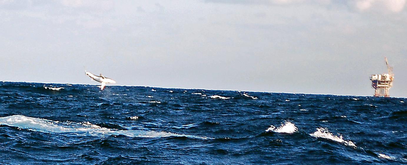 Offshore Venice-Pelagic update.-dsc_0548_edited-jpg
